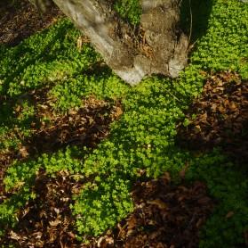 clover.2
