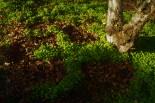 clover.3
