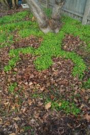 clover.7