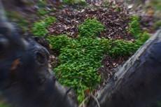 clover14