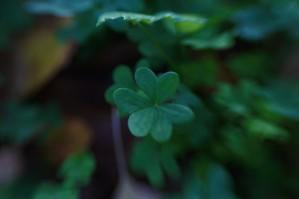 clover9
